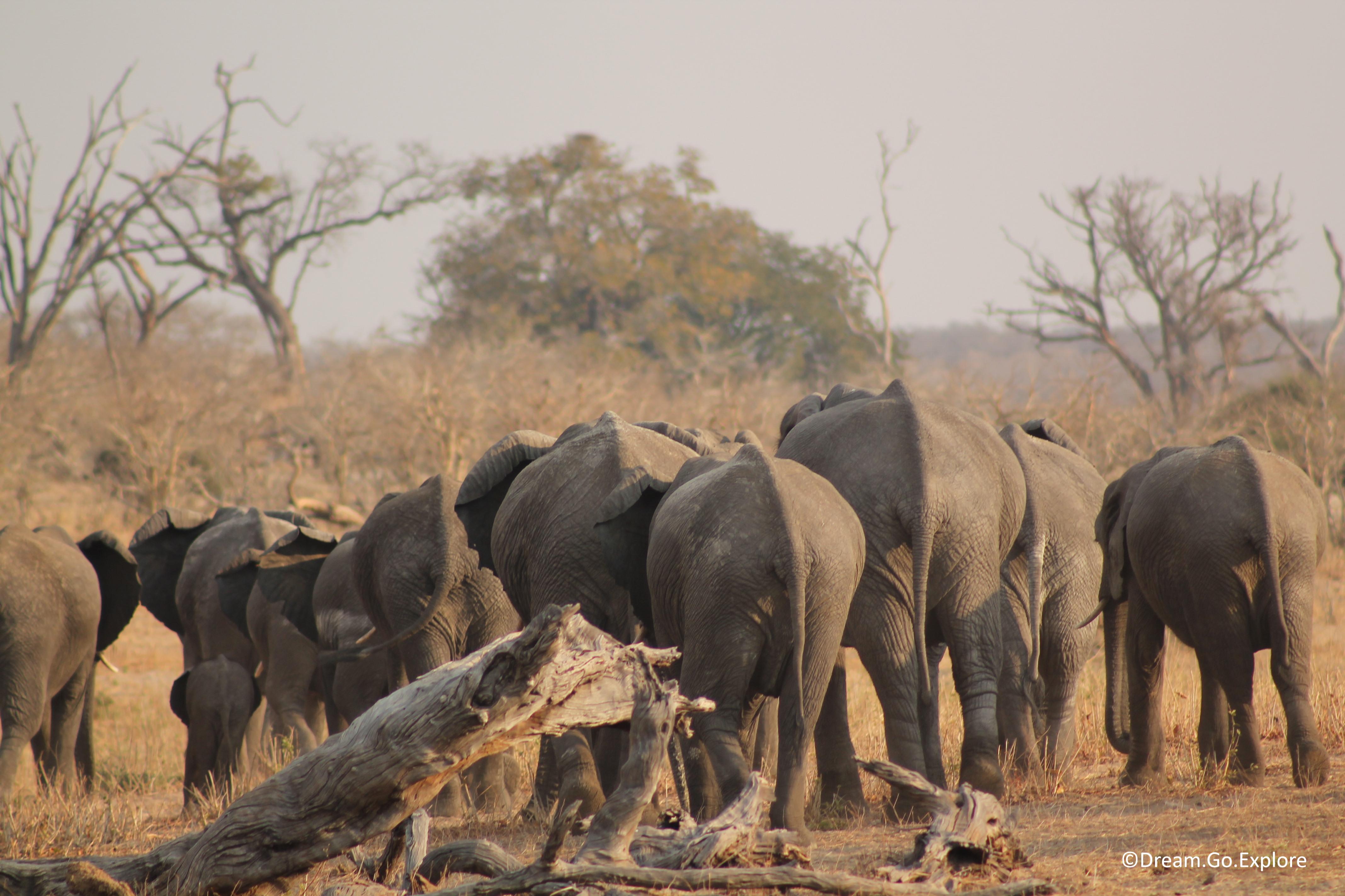 Chobe National Park (Botswana) — Chobe Nationalpark (Botswana)